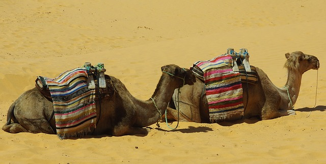 tunisia-1322875_640
